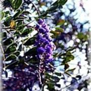 Purple Flowering Tree Poster