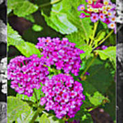 Purple Flowers A Poster