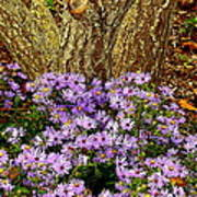 Purple Flowers At Base Of Tree Poster