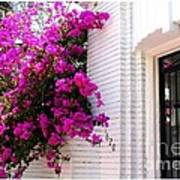 Purple Flowers On White Florida Home Poster