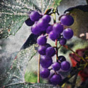 Purple Grapes - Oil Effect Poster