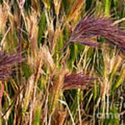 Purple Grasses Poster