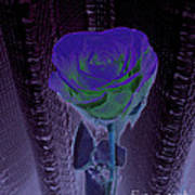 Purple Green Dark Rose Poster