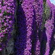 Purple Hanging Flowers Poster