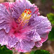 Purple Hibiscus Poster