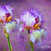 Purple Iris Poster by Lena Auxier
