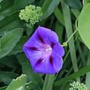 Blume-bestaubung Poster
