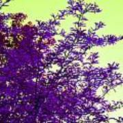 Purple Morning Poster