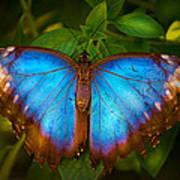 Purple Morpho Butterfly Poster