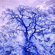 Purple Oak Tree Dream  Poster
