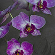 Purple Orchid Flower Poster