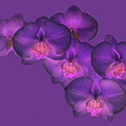 Purple Orchid On Purple Poster