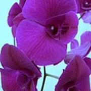 Purple Orchids 3 Poster