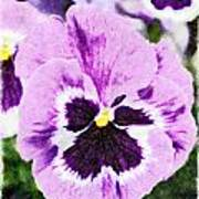 Purple Pansy Close Up - Digital Paint Poster