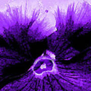 Purple Pansy Rising Poster