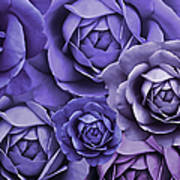 Purple Passion Rose Flower Abstract Poster