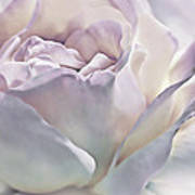 Purple Passion Pastel Rose Flower Poster
