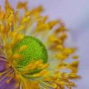 Purple Pastel Daisy Poster
