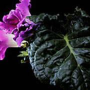 Purple Plant Poster