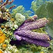 Purple Sponge Poster