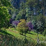Purple Trees Poster