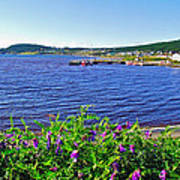 Purple Vetch Overlooking Rocky Harbour-nl Poster