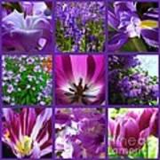 Purple Window Poster