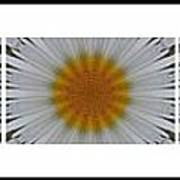 Pushing Up Daisies - Kaleidoscope - Pentaptych Poster