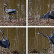 Quadriptych Landing Heron - 9529d Poster by Paul Lyndon Phillips