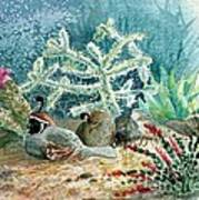 Quail At Rest Poster
