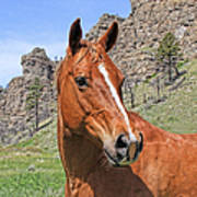 Quarter Horse Portrait Montana Poster