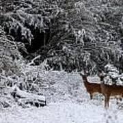 Quartet In The Snow Poster
