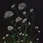 Queen Anns Lace Poster