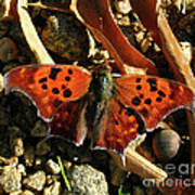 Question Mark Butterfly Poster