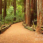Quiet Forest Poster