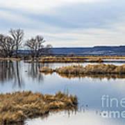 Quiet Wetlands Poster