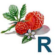 R Art Alphabet For Kids Room Poster