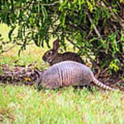 Rabbit And Armadillo Poster