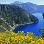 D2m5622-rabbit Brush At Crater Lake Poster