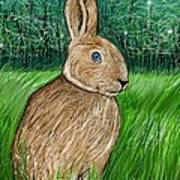 Rabbit In The Grass Poster