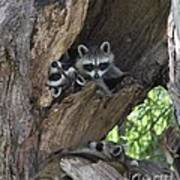 Raccoon Family Time Poster