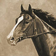 Racehorse Painting In Sepia Poster