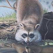 Racoon Reflections Poster