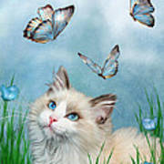 Ragdoll Kitty And Butterflies Poster