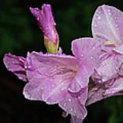 Rain Flower 1 Lavender Poster