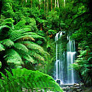 Rain Forest And Waterfall Poster