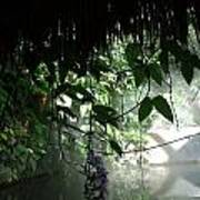 Rain Forest Overhang Poster