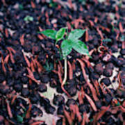 Rain Forest Seedling, Indonesia Poster