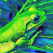 Rain Forest Tree Frog Poster