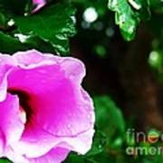 Rain Kissed Flower Poster